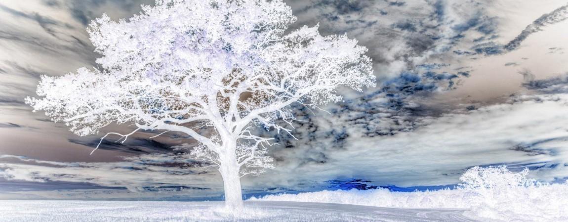 tree-sunset-inverted.jpg